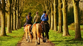 Equitation-(2)